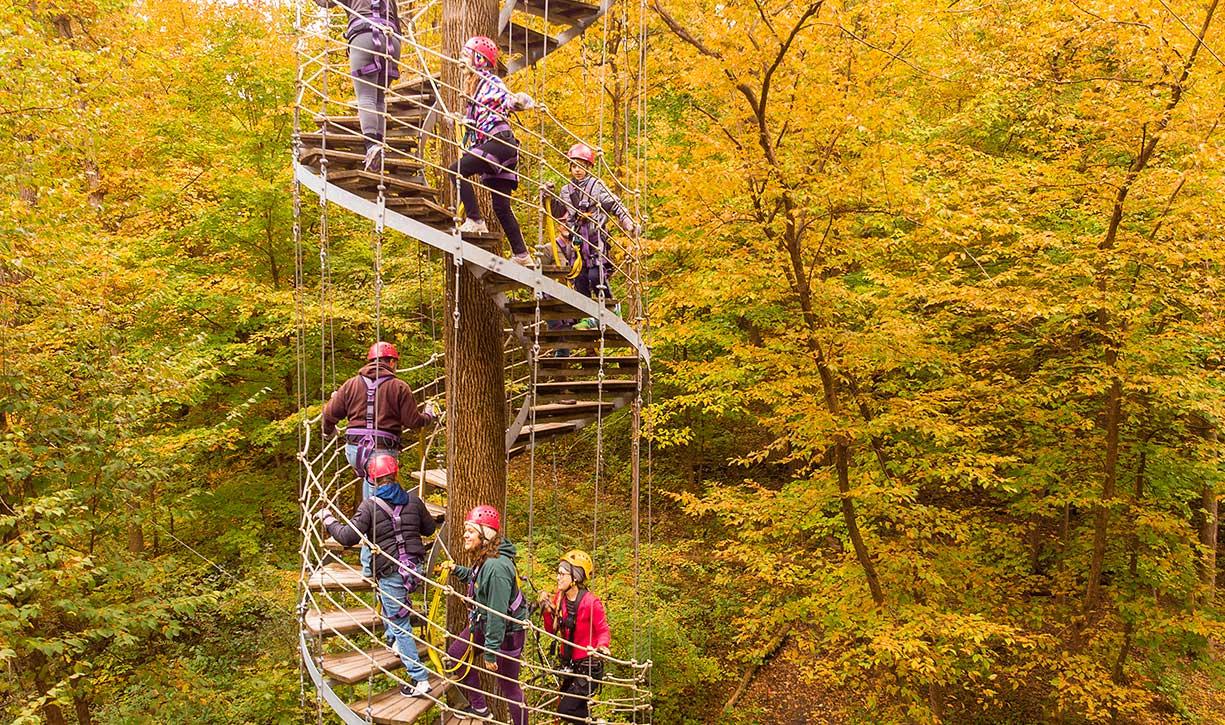 Walk through the treetops