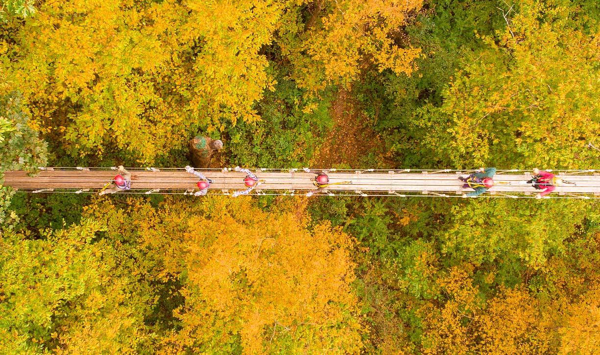 Walk on suspension bridges